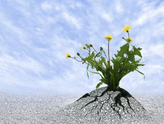 Resilienza2-1170x889